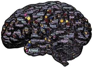 el-cerebro-humano